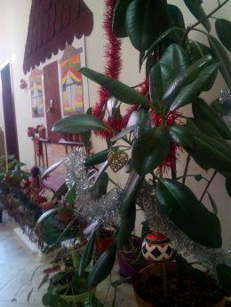 Подготовка за коледните и новогодишни празници - 09 - РЦПППО - Кърджали